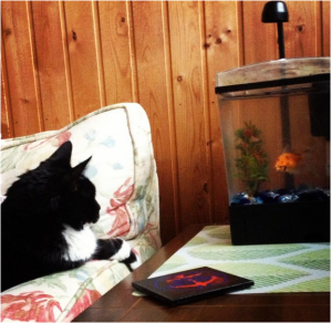 Trixy coexisting with my goldfish, Rajah.