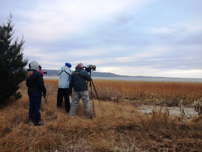 Counting birds on Spermacetti Cove, Sandy Hook in Highlands, New Jersey.