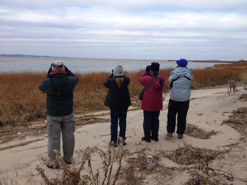 Counting waterfowl on Sandy Hook Bay.