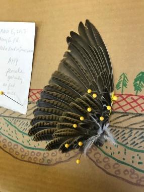 My wing specimen!