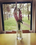 Lupines in Porthole Cabin