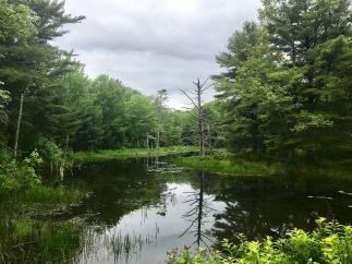 A pond at Hidden Valley